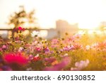 sunset flowers  plants | Shutterstock . vector #690130852