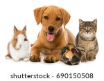 Stock photo group of pets 690150508