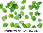 mint leaves on a white... | Shutterstock . vector #690167482