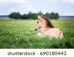 little foal on a pasture. | Shutterstock . vector #690180442