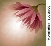 romantic flower   peony