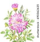 yellow pink large dahlia ... | Shutterstock . vector #690362635