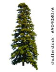 pine tree isolated on white... | Shutterstock . vector #690408076
