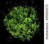 nepeta cataria   Shutterstock . vector #690503272