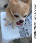 training  puppy dog | Shutterstock . vector #690572962