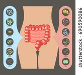 intestinal flora  set of good... | Shutterstock .eps vector #690590086