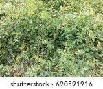 tomatoes   Shutterstock . vector #690591916