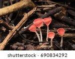 mushroom pink fungi cup on... | Shutterstock . vector #690834292