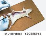 rat dissection  lift skin away... | Shutterstock . vector #690856966
