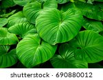 close up detail tropical nature ... | Shutterstock . vector #690880012