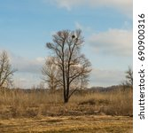 Small photo of Lonely alder tree early spring. Journey. Ukraine. Europe.
