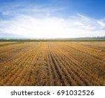 summer wheat field after a... | Shutterstock . vector #691032526