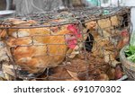 many hens in crowded cage | Shutterstock . vector #691070302