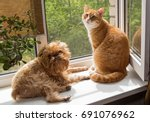 Stock photo ginger the cat and the dog sit on the windowsill and bask in the sun 691076962