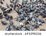 Gray Pigeons Eating Food On Th...