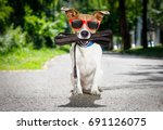 Stock photo afro look dog with very big curly black hair or wig wearing orange hairdressers towel isolated 691126075