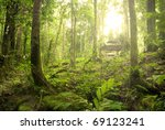 rain forest with fogs and misty ... | Shutterstock . vector #69123241