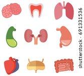 human internal organs on white... | Shutterstock .eps vector #691331536