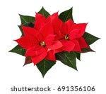 christmas poinsettia flowers... | Shutterstock . vector #691356106