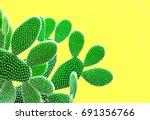 cactus fashion set. sweet... | Shutterstock . vector #691356766