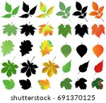 collection of different species ... | Shutterstock .eps vector #691370125