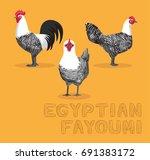chicken egyptian fayoumi... | Shutterstock .eps vector #691383172