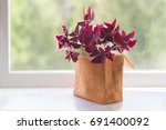 Houseplant Oxalis From The...