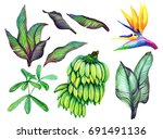 tropical set isolated on white... | Shutterstock . vector #691491136