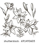 vector set with ornate white... | Shutterstock .eps vector #691493605