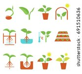 growing plant flat icons set | Shutterstock .eps vector #691510636