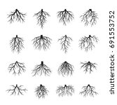 set of black roots. vector... | Shutterstock .eps vector #691553752