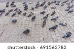 pigeons on the pavement. | Shutterstock . vector #691562782
