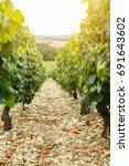 wine design vineyard ... | Shutterstock . vector #691643602