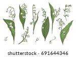 lily of the valley realistic... | Shutterstock .eps vector #691644346