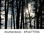 the forest with black barrels... | Shutterstock . vector #691677556