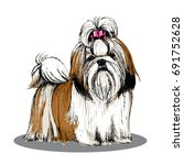Shih Tzu Color Sketch