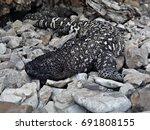 Beaded Mexican Lizard