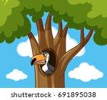toucan bird in hallow tree... | Shutterstock .eps vector #691895038