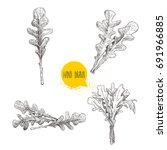 hand drawn sketch style arugula ... | Shutterstock .eps vector #691966885