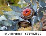 eucalyptus flower | Shutterstock . vector #691982512