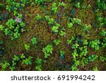 Forest Soil With Grass. Top...
