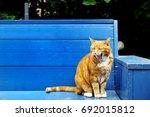 nice cat over a wooden blue...   Shutterstock . vector #692015812