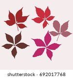 autumn virginia creeper leaves. ... | Shutterstock .eps vector #692017768