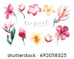 Stock photo hand drawn watercolor tropical flower set exotic palm leaves jungle tree brazil tropic botany 692058325