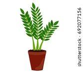 houseplant  zamioculcas. zz... | Shutterstock . vector #692077156