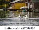 Sava River  Serbia   Four Gees...