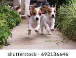 Stock photo two dogs running between plants 692136646