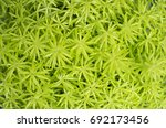 close up of green plant... | Shutterstock . vector #692173456