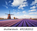 sunset over fields of daffodils.... | Shutterstock . vector #692182012