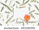frame with branches  leaves and ... | Shutterstock . vector #692185396